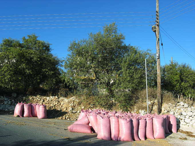 livestock feed. Ineia. Pafos dstr. August '09. Photo: Pan. all rights reserved