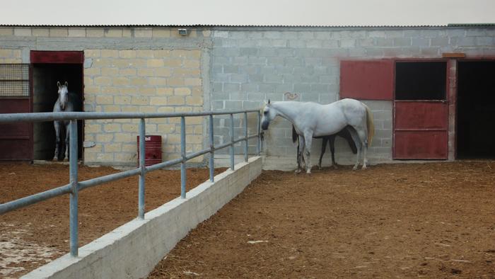 Softades. Kiti. Larnaka dstrct. Sept '09. Photo: Aris C. all rights reserved