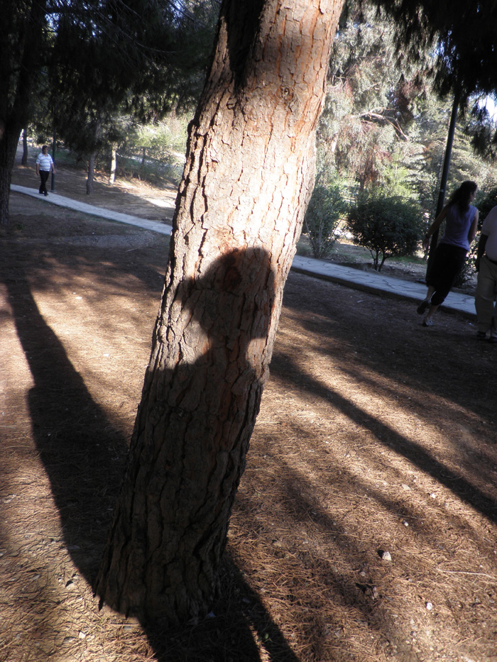 shadow 110053